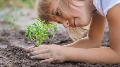 This image shows a child planting a plant in the garden.